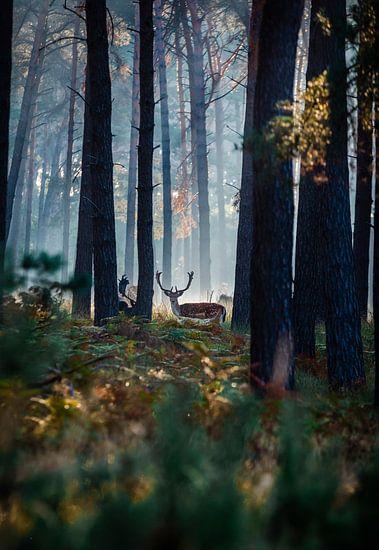 Hert in het ochtendgloren