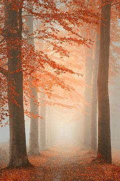 Droom bos van Saskia Dingemans