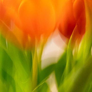 Tulpen | Sfeerbeeld van Rob van der Pijll