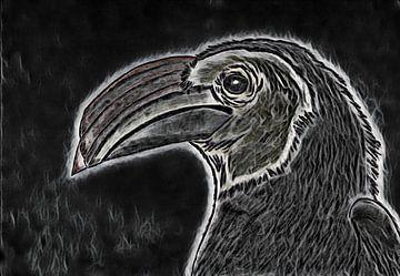 Nashornvogelzeichnung / bearbeitet. von Jose Lok