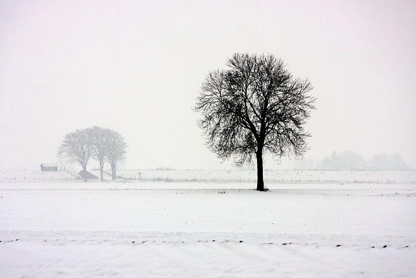 Boom in wit polderlandschap van Jan Sportel Photography