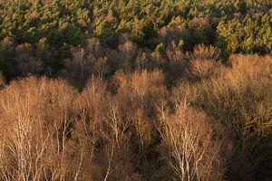 Kale bomen in vogelperspectief