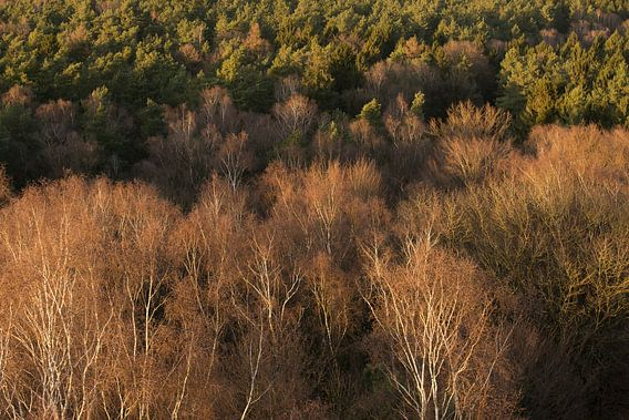 Kale bomen in vogelperspectief van Elroy Spelbos