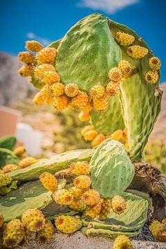 Grote cactus vijg vijg met bloem/bal van Tonny Visser-Vink