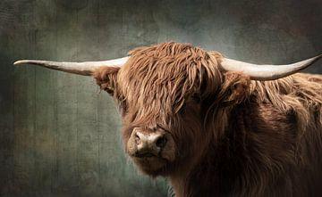Porträt eines schottischen Highlanders mit Vintage-Verarbeitung