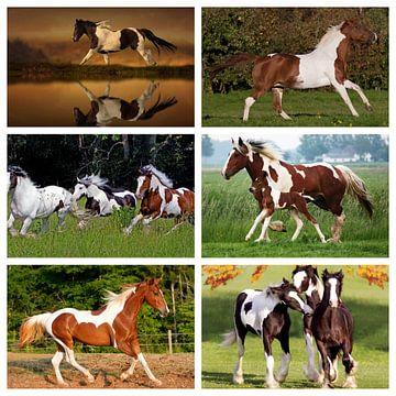 bonte paarden collage van Marja Hoebe
