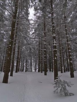 Besneeuwd wandelpad in dicht sparrenbos in de winter van Timon Schneider