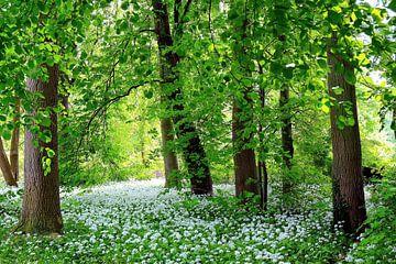Spring von Ostsee Bilder