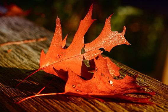 Herfstbladeren op tafel