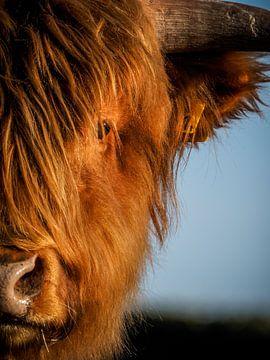 Porträt eines schottischen Highlanders von Kayleigh Heppener