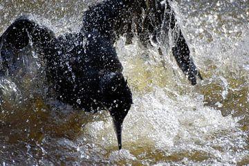 Aalscholver spat in het water van Nicolette Vermeulen