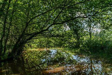 Spiegeling van boom in water In natuurgebied Pannehoef van Paul Veen