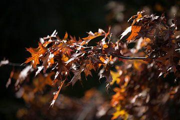 herfst bladeren van Emma van Veldhuisen