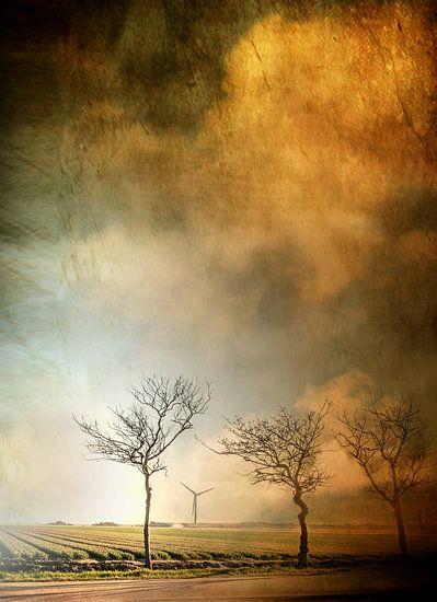 Bäume am Tulpenfeld von Vera Kämpfe