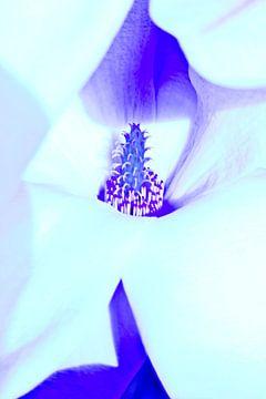 bloemen van sarp demirel