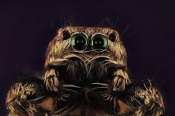 Springende spinnen von Rob Smit