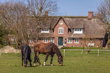 Paarden in de wei in Morsum, Sylt van Christian Müringer