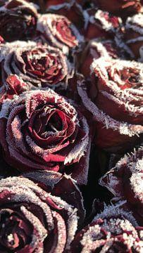 Frozen roses von Daphne Poelstra