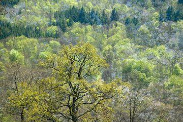 lentebos op een heuvel van Hanneke Luit