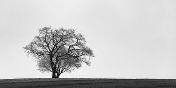 Groot en klein, boom in silhouet van Denis Feiner