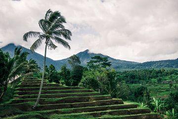 Groene rijstterrassen op Bali van road to aloha
