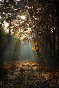 Herfst bospad van