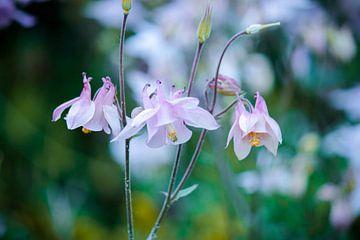 Pink flowers van Iris Lobregt