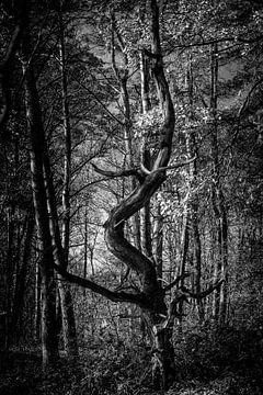 Baum in Bewegung von Ivo Michielsen