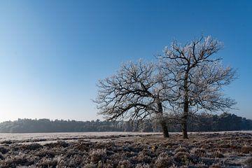 Winter op de Veluwe 01 von Cilia Brandts