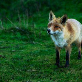 Fox 2 sur Kirsten Scholten