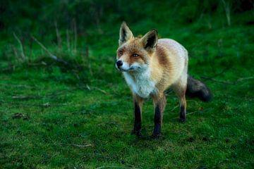 Fox 2 van Kirsten Scholten