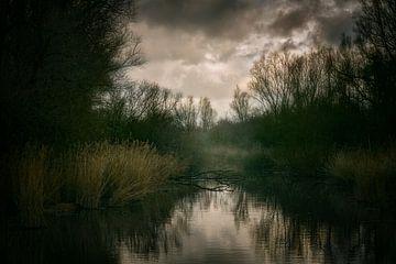 Weidenwald [Almere] von Ron Hoefs