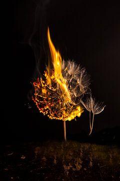 Burning Dandelion 2 van Liane Boddaert