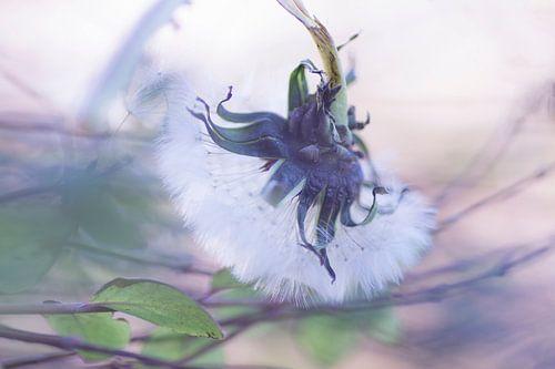 Blown in the wind van Birgitte Bergman