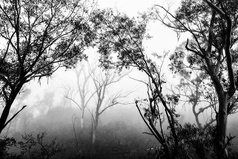 Regenwoud in de mist III van Ines van Megen-Thijssen