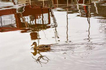 Een eend drijft op water, waarin boten reflecteren van Edith Albuschat