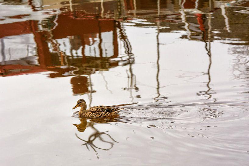 Eine Eine Ente schwimmt auf Wasser, in dem sich Boote spiegeln von Edith Albuschat