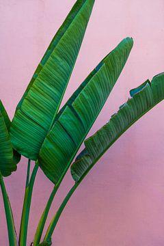 Tropisch von Anneloes van Acht