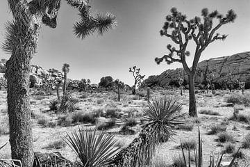 Joshua Tree national Park von Herman van Heuvelen