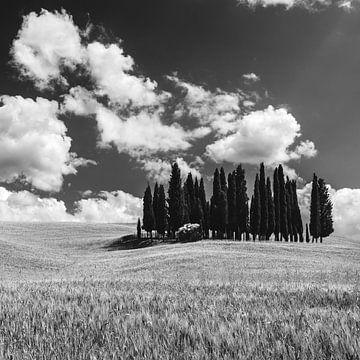 Kreis von Zypressen in Torrenieri, Toskana, Italien von Henk Meijer Photography