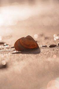 Sea Shell van Michelle Rook