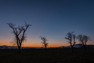 Bomen als Silhouet van Perry Wiertz