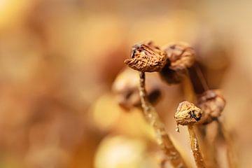Mooie uitgedroogde paddenstoelen van Roosmarijn Bruijns