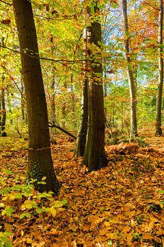 Bos in de herfst van Günter Albers