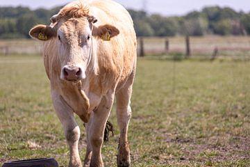 Kuh auf der Wiese von Photologic  Fotografie