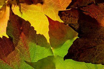 Herfstbladeren van Henk Leijen