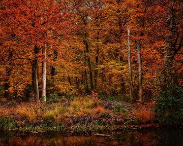 Herfst Kleuren van Jimmy Sorber