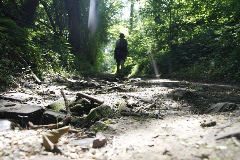 Een boswandeling van Judith van Bilsen