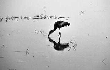 Dubbele watervogel van Marit van de Klok