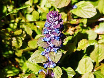 Paarse bloem van Angelique Roelofs